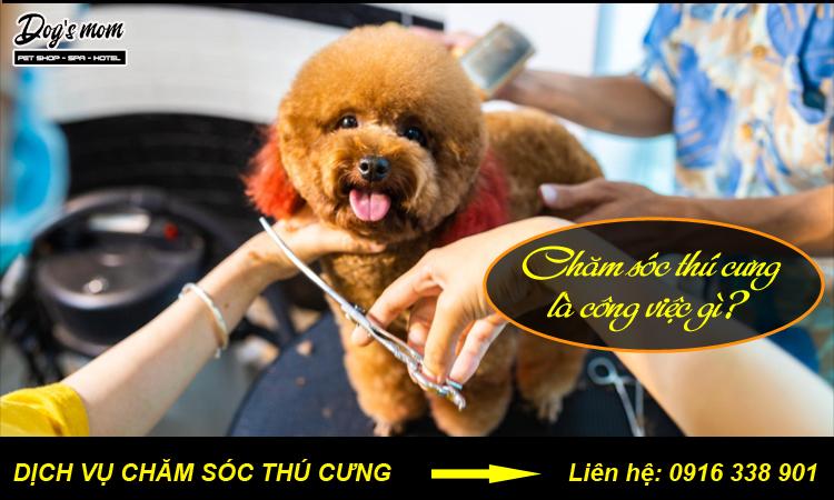 Công việc chăm sóc thú cưng